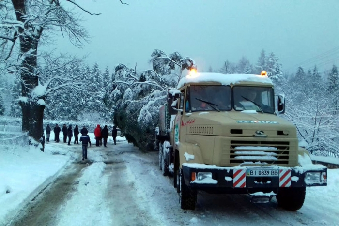 KrAZ Delivers Huge Green Tree from Subcarpathia to Kiev